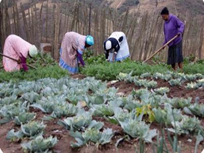 Village Farm Project